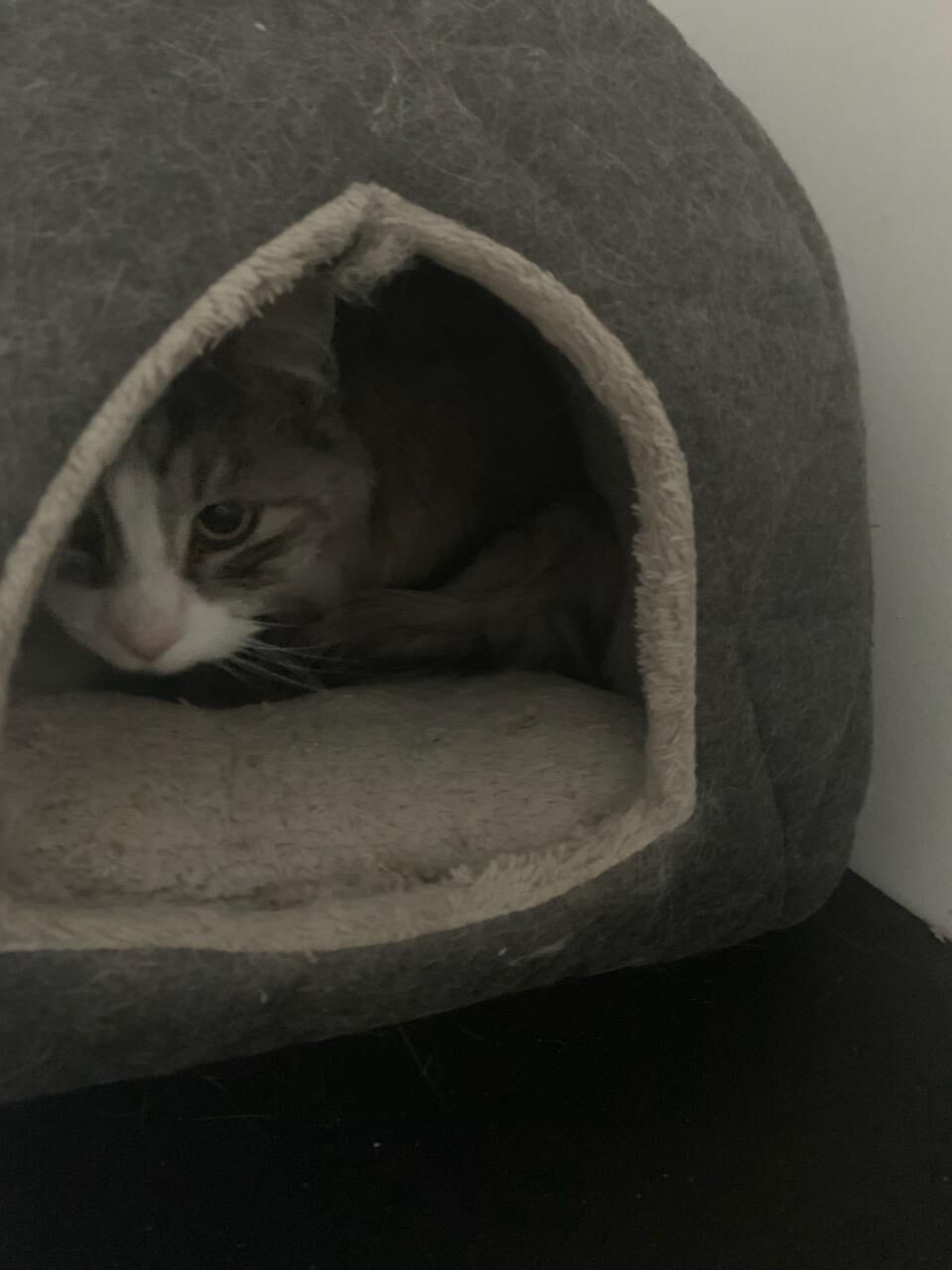 Cat crouched inside a cat bed, peering out at the camera