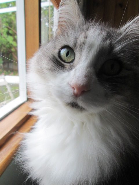 Cat at window, looking up at camera.