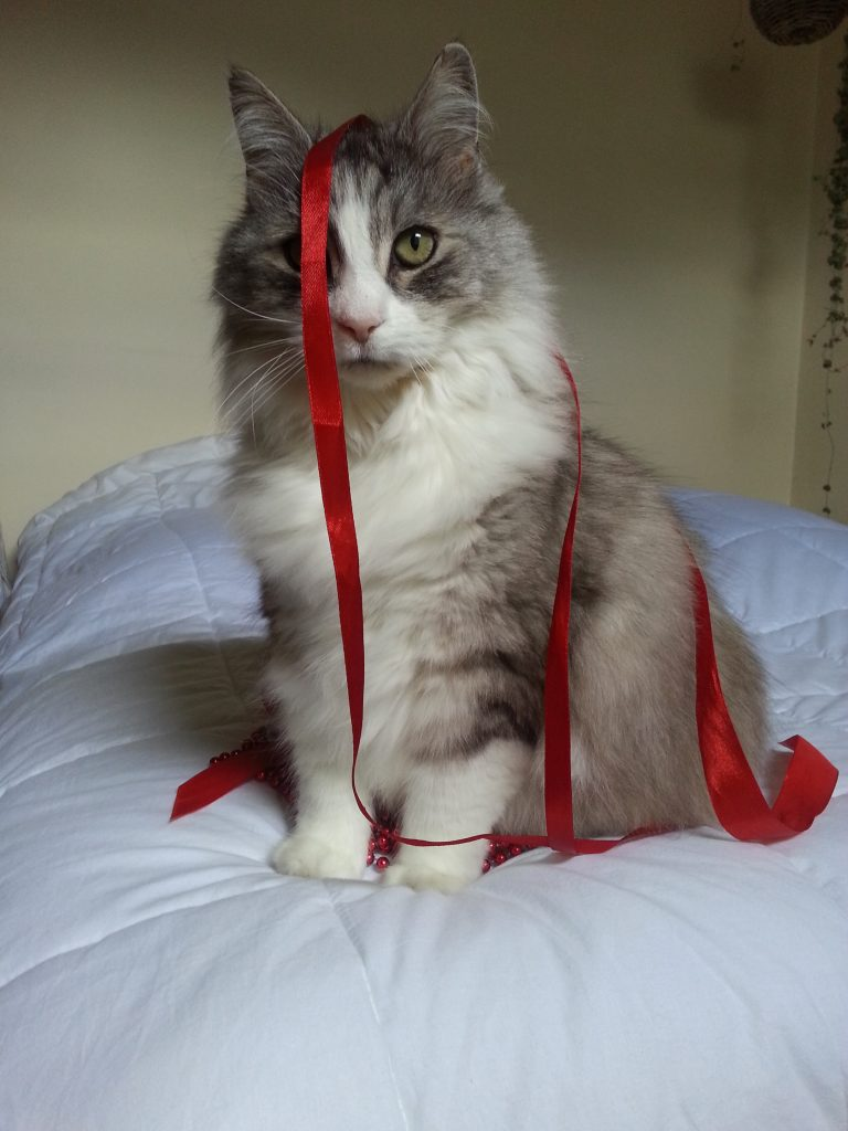 Cat sitting on bed with red ribbon draped over his head.