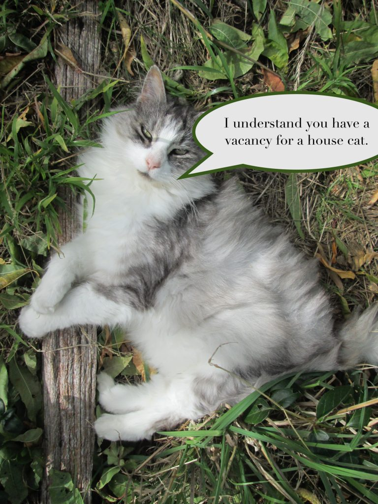"""Cat lying in the grass with speech bubble: """"I understand you have a vacancy for a house cat."""""""